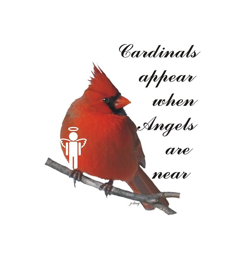 Digital Art Digital Art Cardinals And Angels By Jacquie King