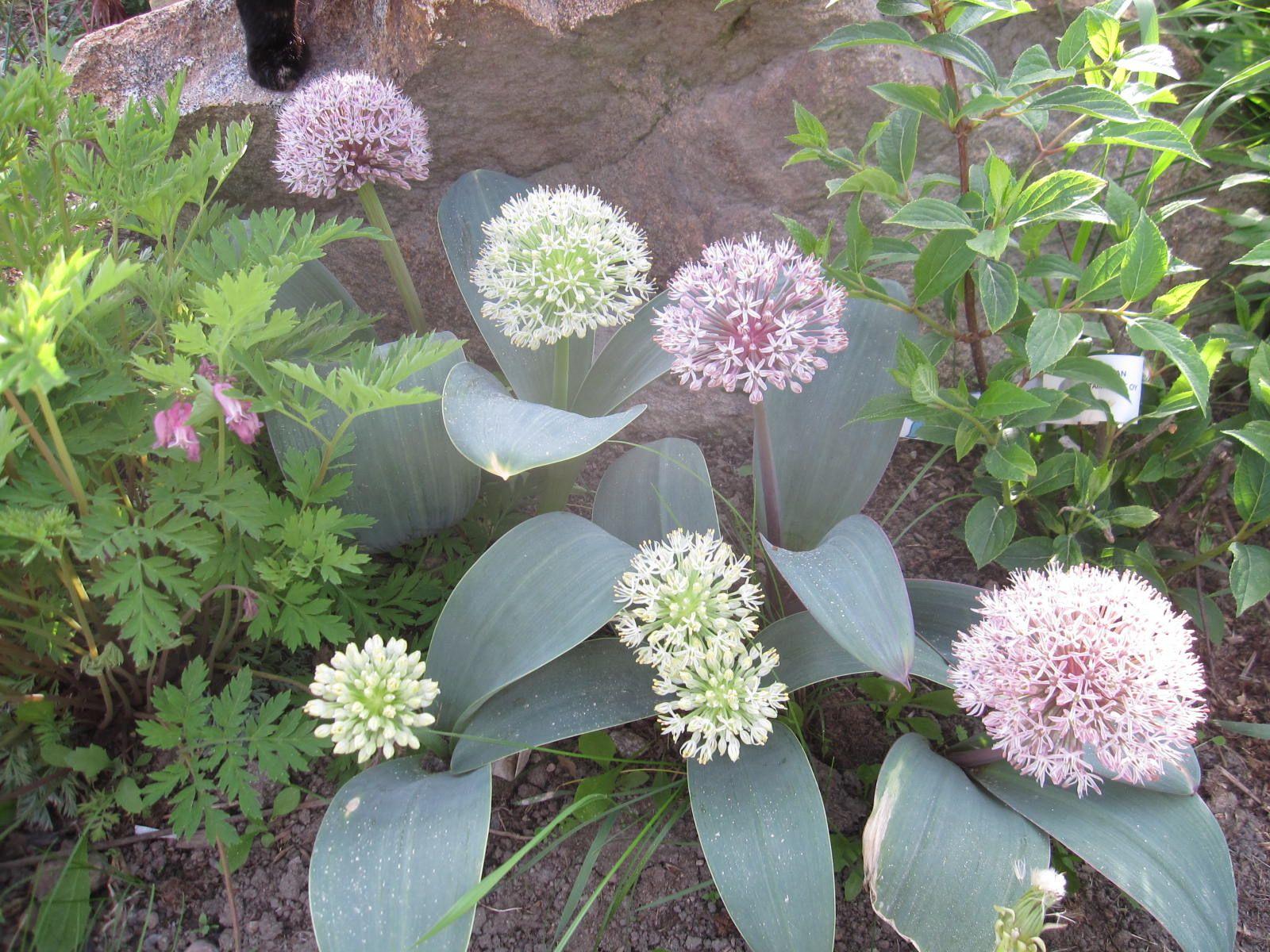 Kuvahaun tulos haulle laukka kukka