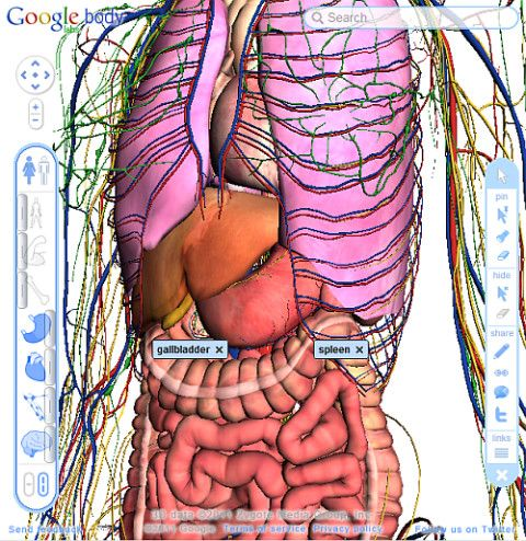 Map Of The Human Body Organs | A&P | Pinterest | Human body organs ...