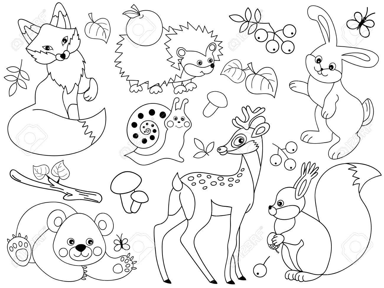 Set Of Black And White Cute Wild Animals In The Forest Fox Deer Bear Hedgehog Squirrel Snail And Animal Coloring Pages Cute Wild Animals Animal Clipart