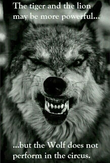 Be a Wolf...