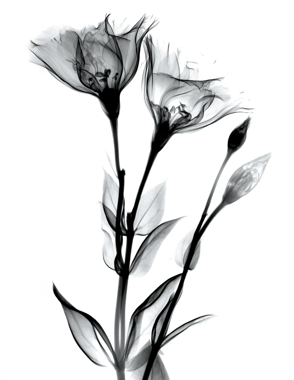 закуску длинный цветок рисунок скалы