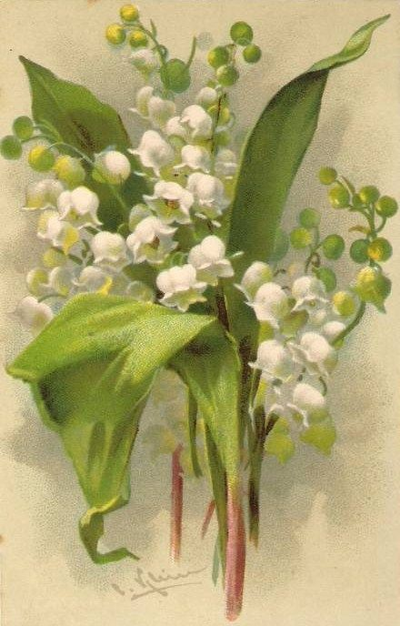 Lily of the valley - Vintage postcard (illustration by Catharine Klein)