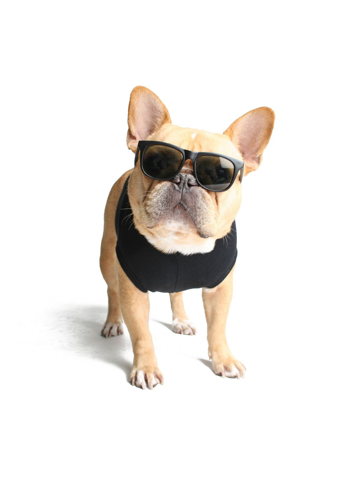 bdf2aa4709 IT DOESN T GET ANY BETTER THAN THIS. FINALLY A PAIR OF SUNGLASSES THAT FIT  THE PETITE FRENCHIE HEAD. ULTRA-COOL BLACK WAYFARER SUNGLASSES PERFECT FOR  ...