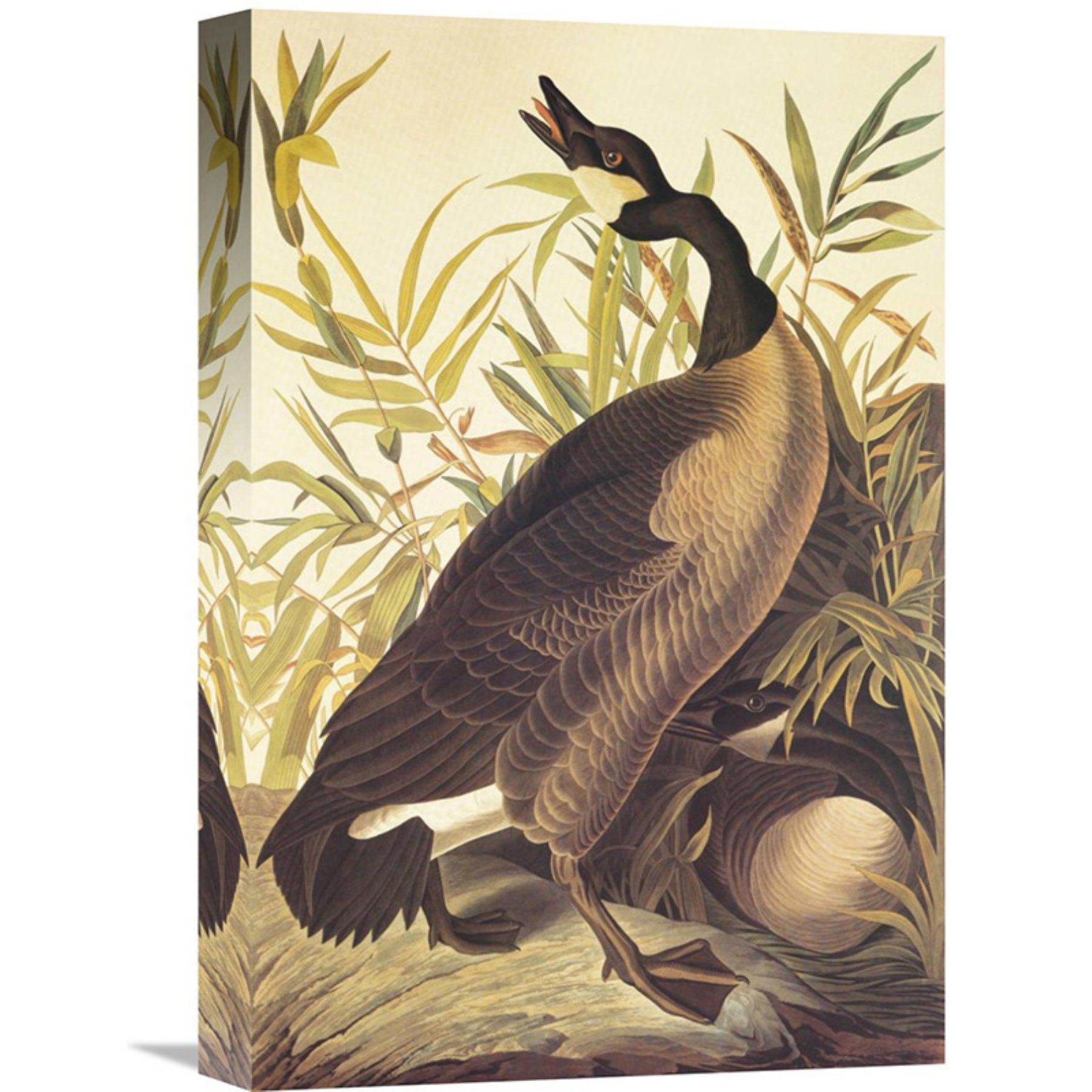 Global Gallery Canada Goose Wall Art - GCS-197768-1218-142 | Canada ...