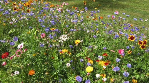 W Paryskim Stylu Flowers Wildflower Garden Flower Painting