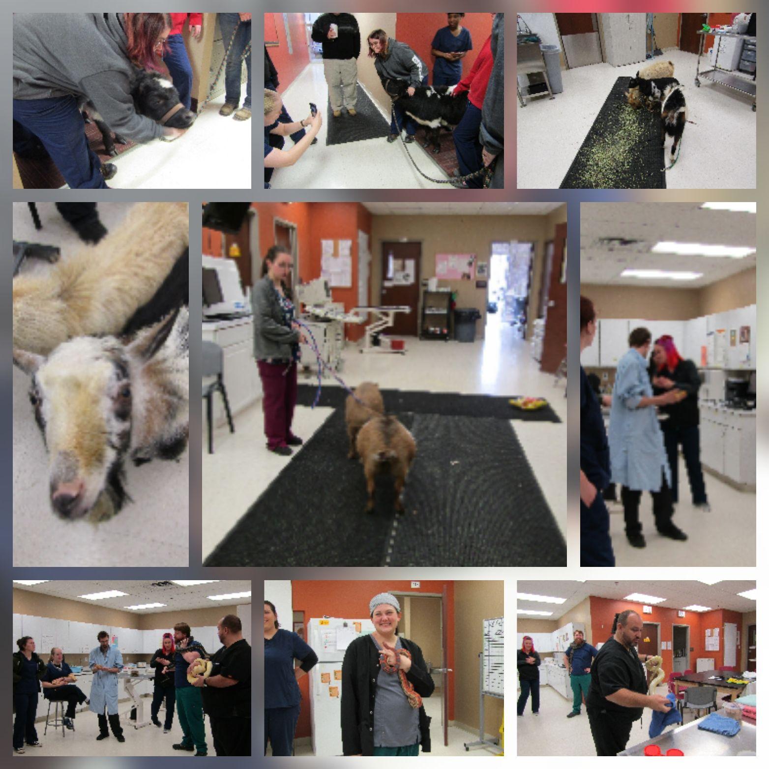 Veterinary Technician Associate Degree Program