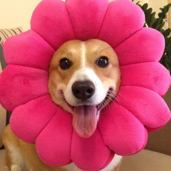 I'm a beautiful flower