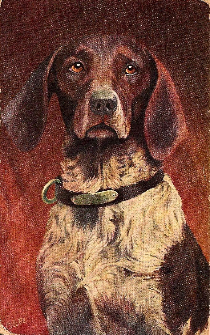 Handsome vintage trading card Dogs Dog art, Dog