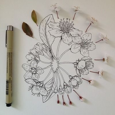 Draw, drawing, illustration, flowers
