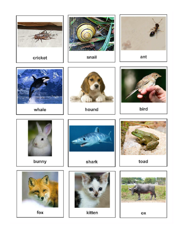 Quick As A Cricket Free Printable Sequencing Cards Sequencing Cards Reading Pictures Language And Literature