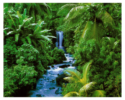 Forest Ecosystem - ThingLink