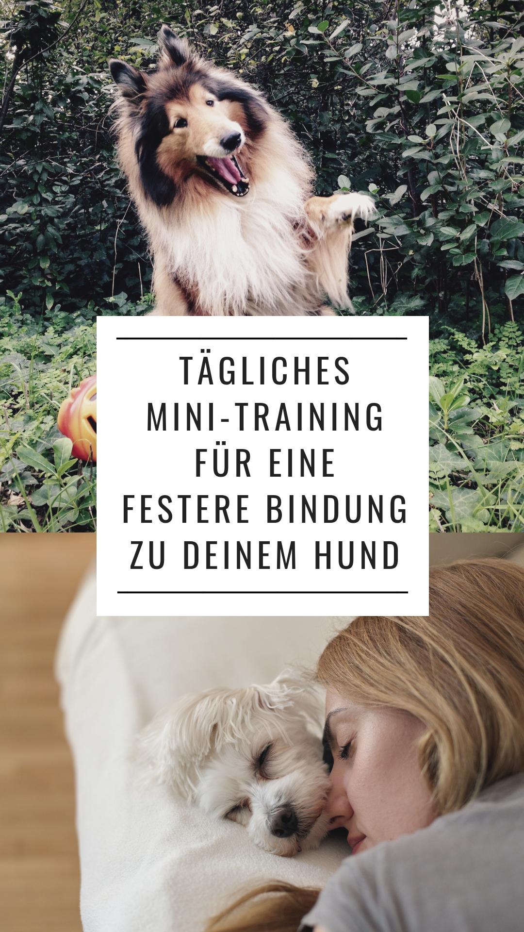 #Hund Bindung Hundetraining Hunde Training Tipps Ideen Bilder dog Hundeliebe