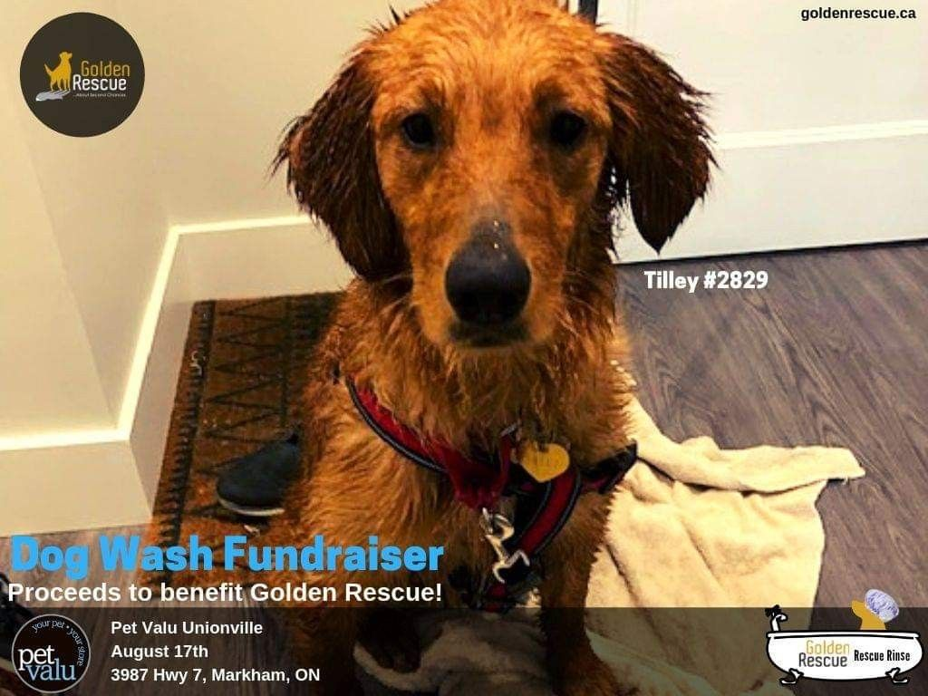 The Amazing People At Pet Valu Unionville 3987 Hwy 7 Are Having A Charity Dog Wash On Saturday August 17th From 10am Dog Wash Dog Washing Station Muddy Paws