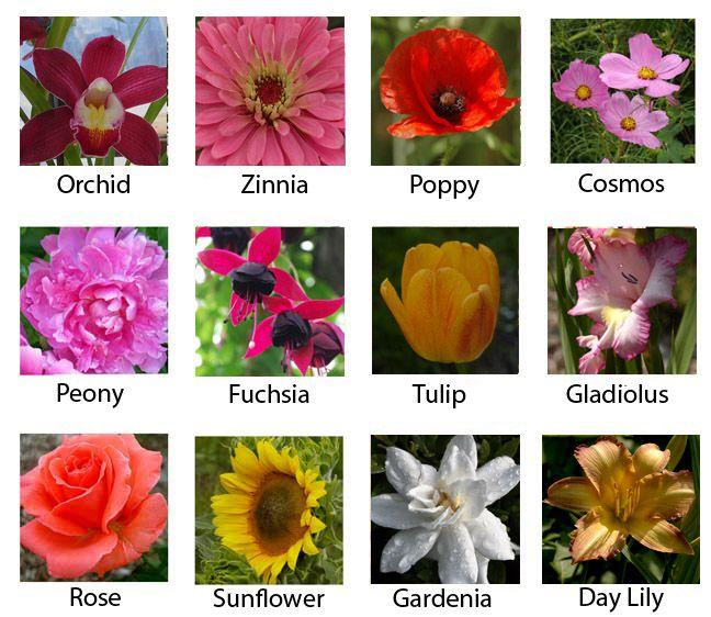 Most Popular Flowers Most Popular Flowers Most Beautiful Flowers Flower Names