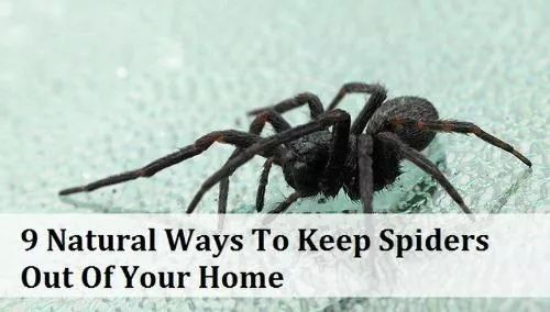 Keep spiders out!