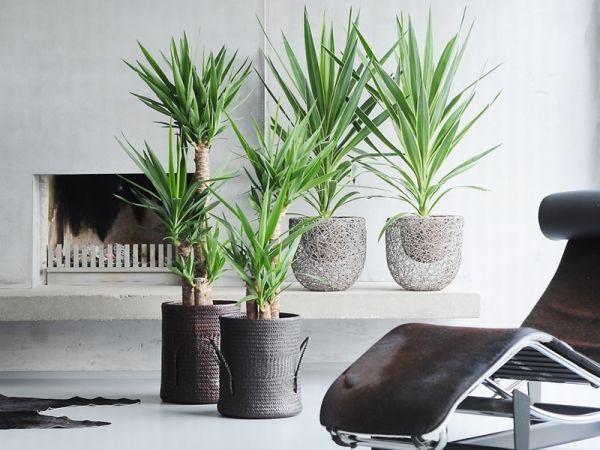 Kwiaty Doniczkowe Latwe W Uprawie W Domu Szukaj W Google Indoor Palms Indoor Decor Deals