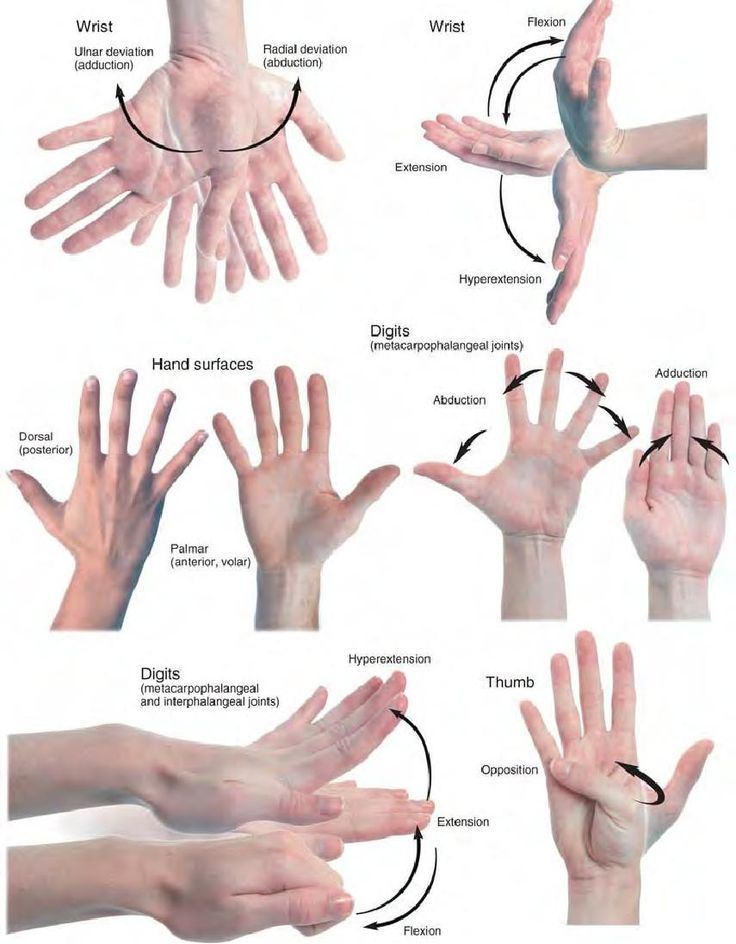 Anatomy references — Movements of the hand | Anatomy Reference ...