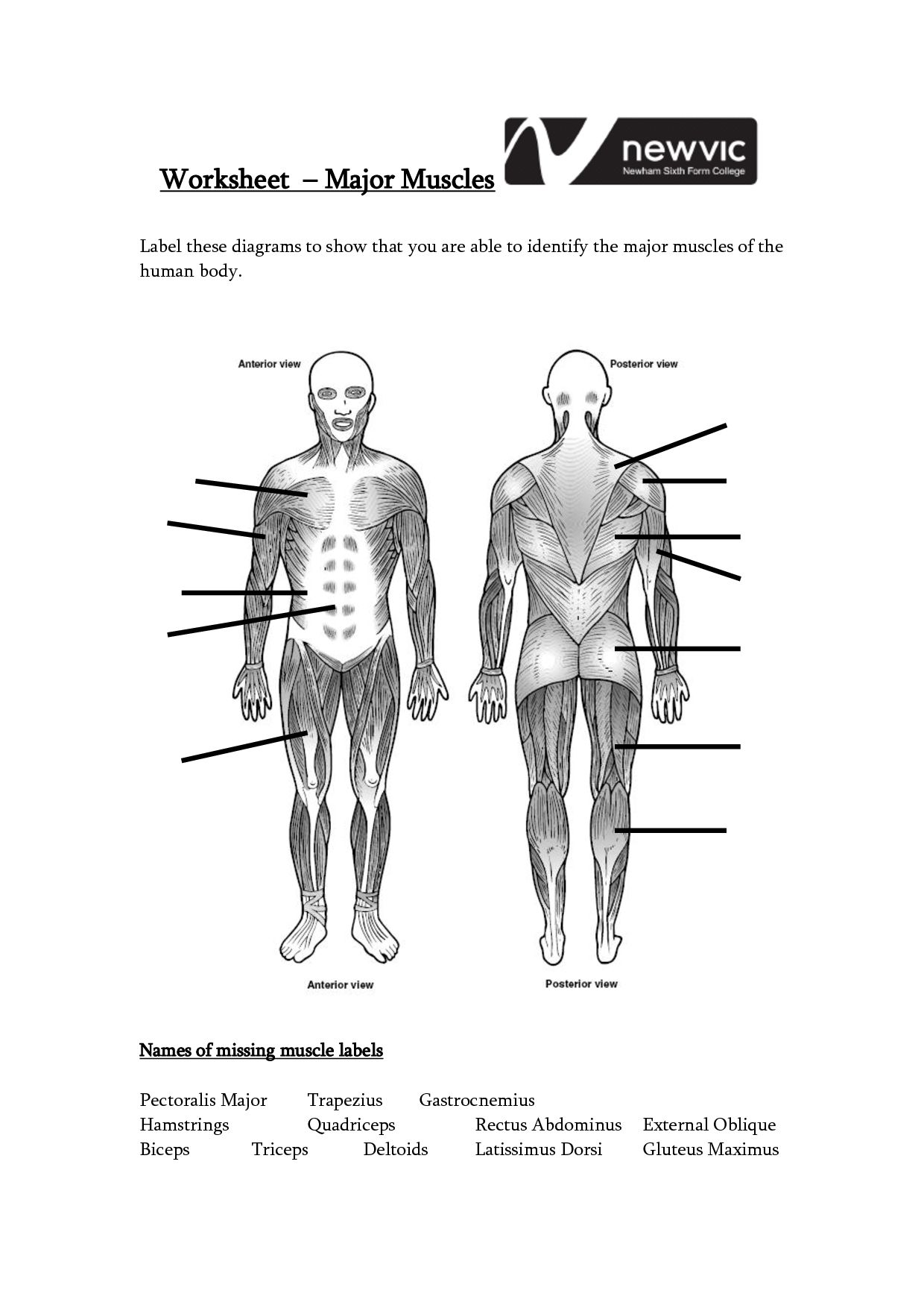 Human Muscle Worksheet Label The Muscles Worksheet