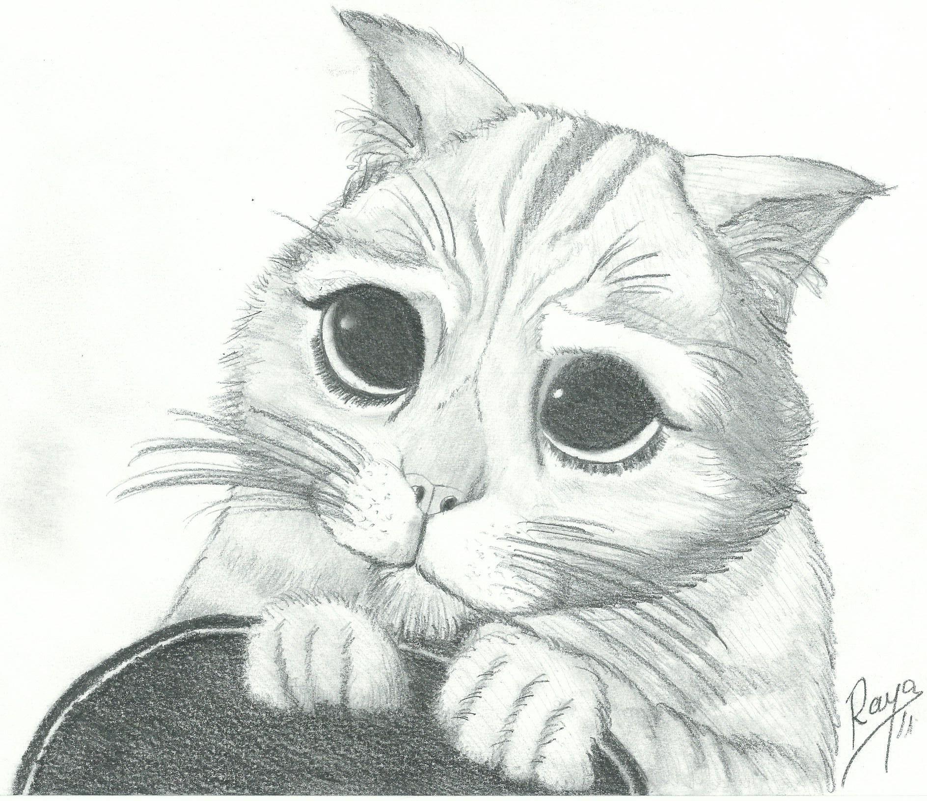 El Gato Con Botas Dibujos De Gatos Dibujos De Animales Tiernos Gato Con Botas