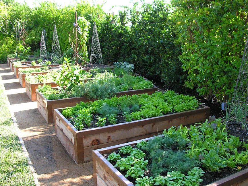 These raised vegetable and fruit gardens are perfect for for The perfect vegetable garden