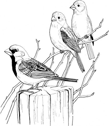 Three Sparrows On Tree Bird Coloring Pages Tree Coloring Page