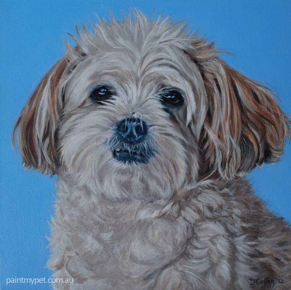 Micky Maltese X Shih Tzu Paintmypet Pet Portraits Perth Pet