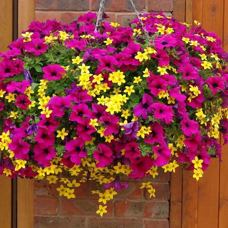 Jakie Kwiaty Posadzic W Maju By Kwitly Do Poznej Jesieni Czyli Kwiaty Na Balkon I Taras N Hanging Flower Baskets Hanging Flowers Plants For Hanging Baskets