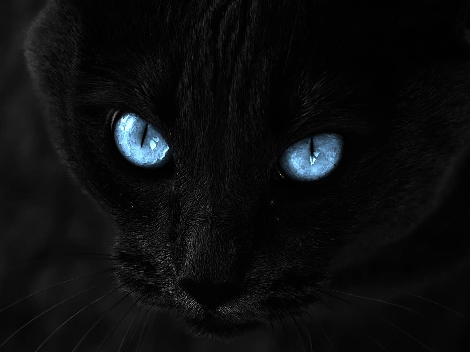 All Credit Goes To Original Owners And Photographers Cat With Blue Eyes Cats Eyes Wallpaper