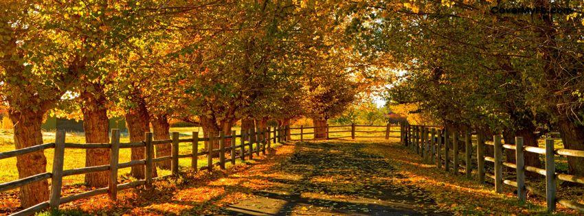 Autumn Road ~~Facebook Covers,