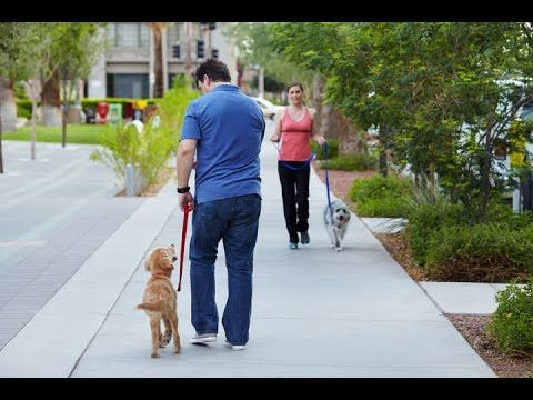 How To Train Your Dog To Not Pull On The Leash Utilize The 4