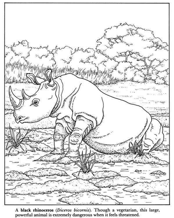 Pin von Johanna Lerwick - Wildlife/Nature Artist auf Animal coloring ...