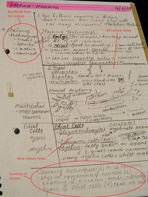 5 Popular Note Taking Strategies