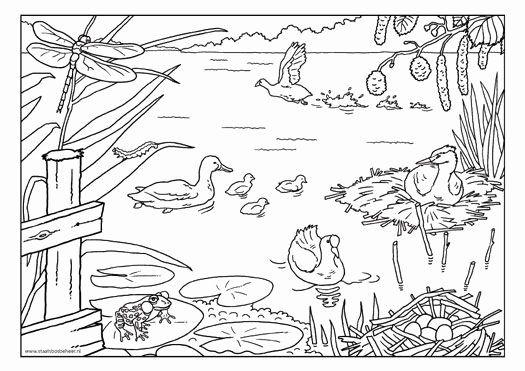 Pond Animals Coloring Pages in 2020   Dieren kleurplaten ...