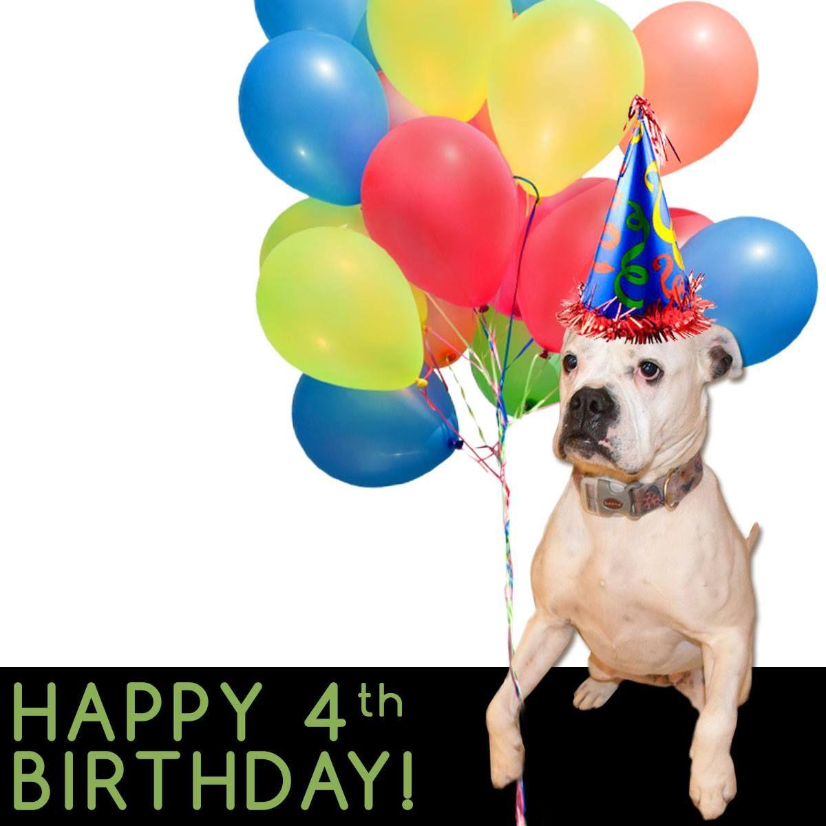 Our communications coordinator, Rosie, celebrates her 4th birthday on April 28, 2015! Happy birthday, Rosie!