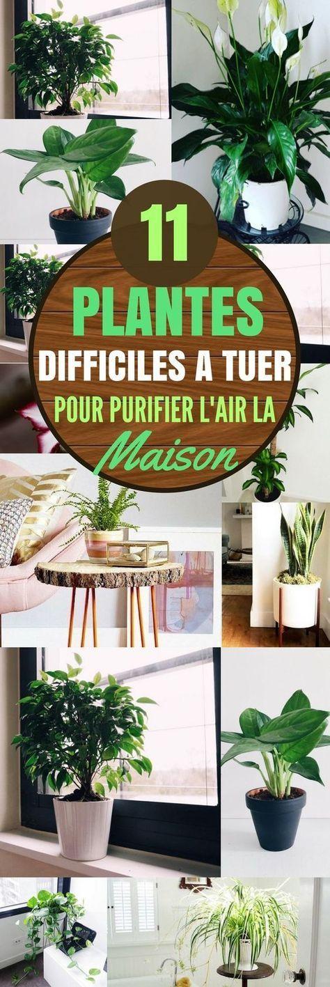 11 plantes g niales pour purifier l 39 air de votre int rieur jardinage pinterest. Black Bedroom Furniture Sets. Home Design Ideas