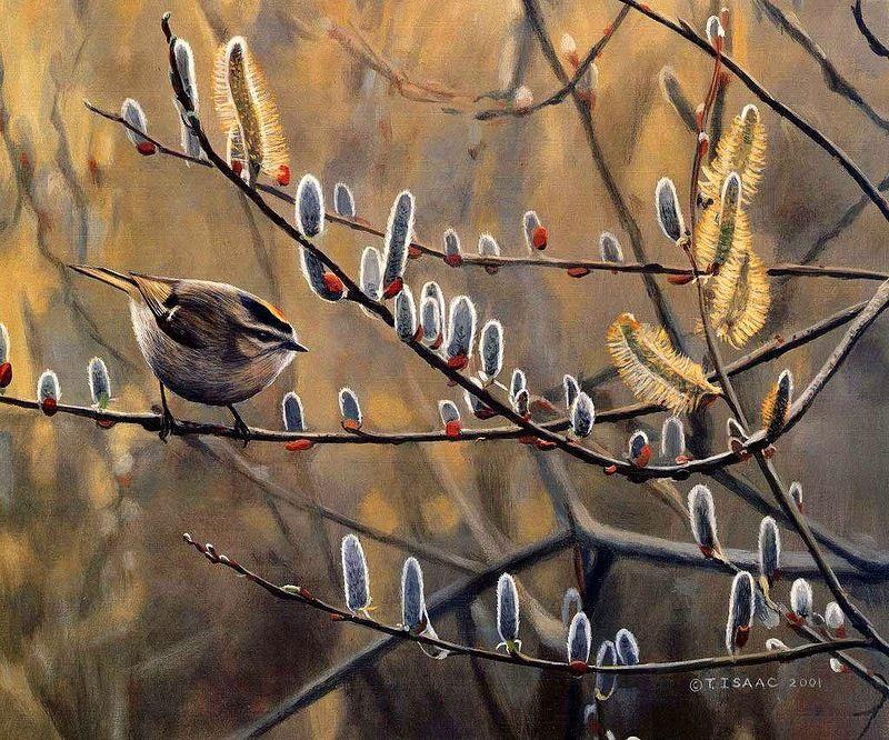 картинки ранняя весна верба и птички представить девушку