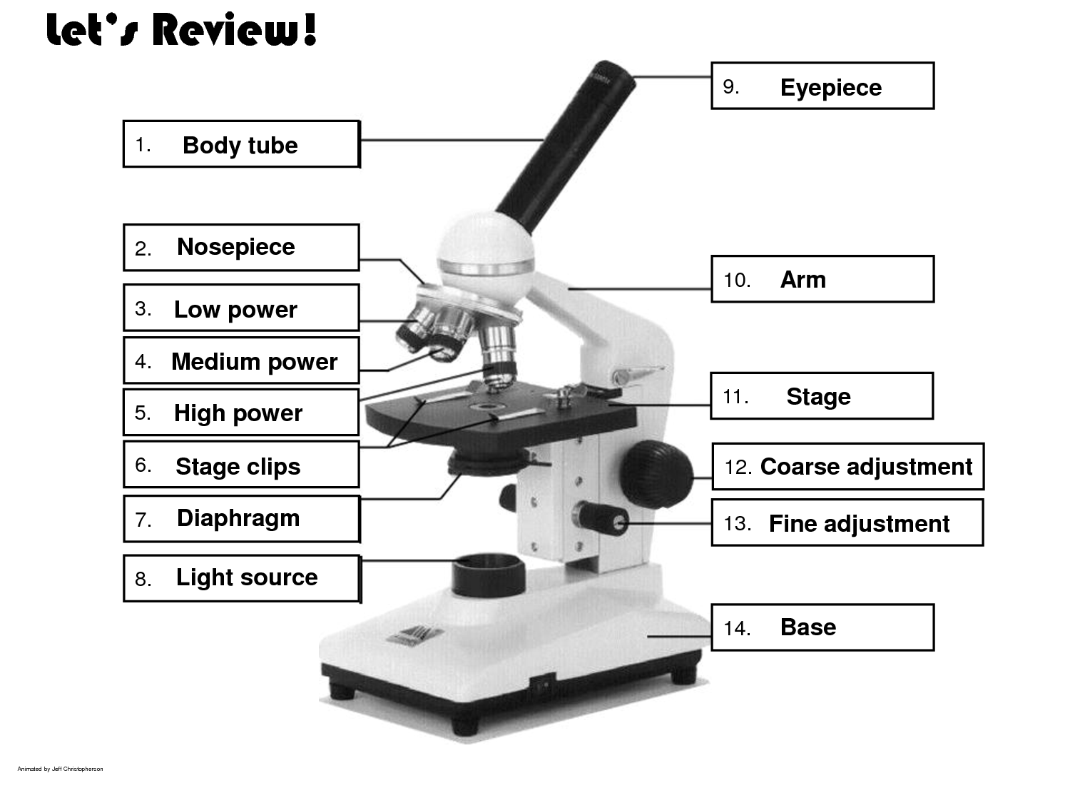 The Compound Microscope Worksheets