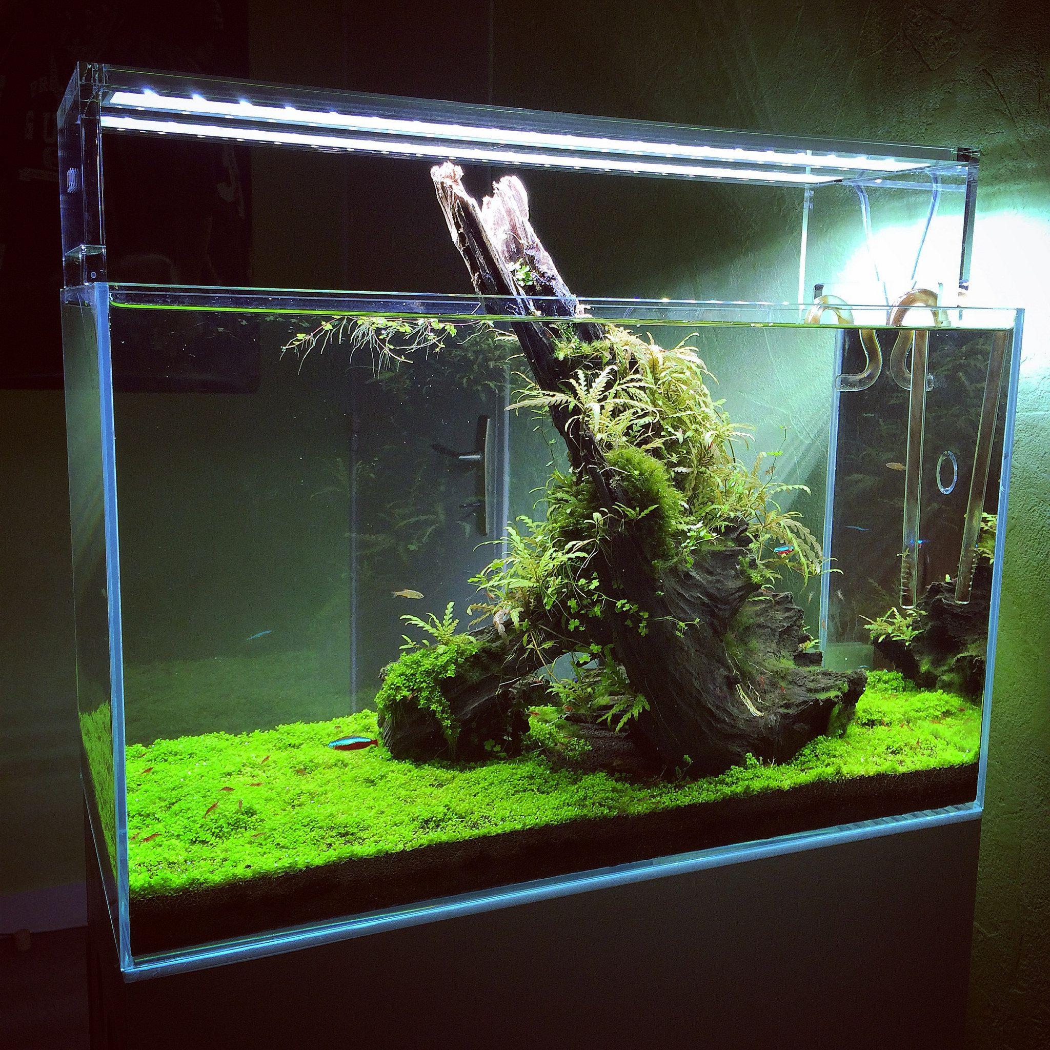 "Final Shot ""Décollage"" | Aquascape, Cool fish tanks, Aquarium"