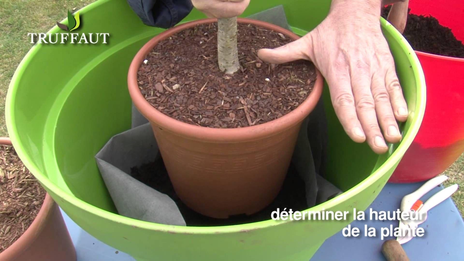 Plantation d\'un arbre fruitier nain en pot - Jardinerie ...