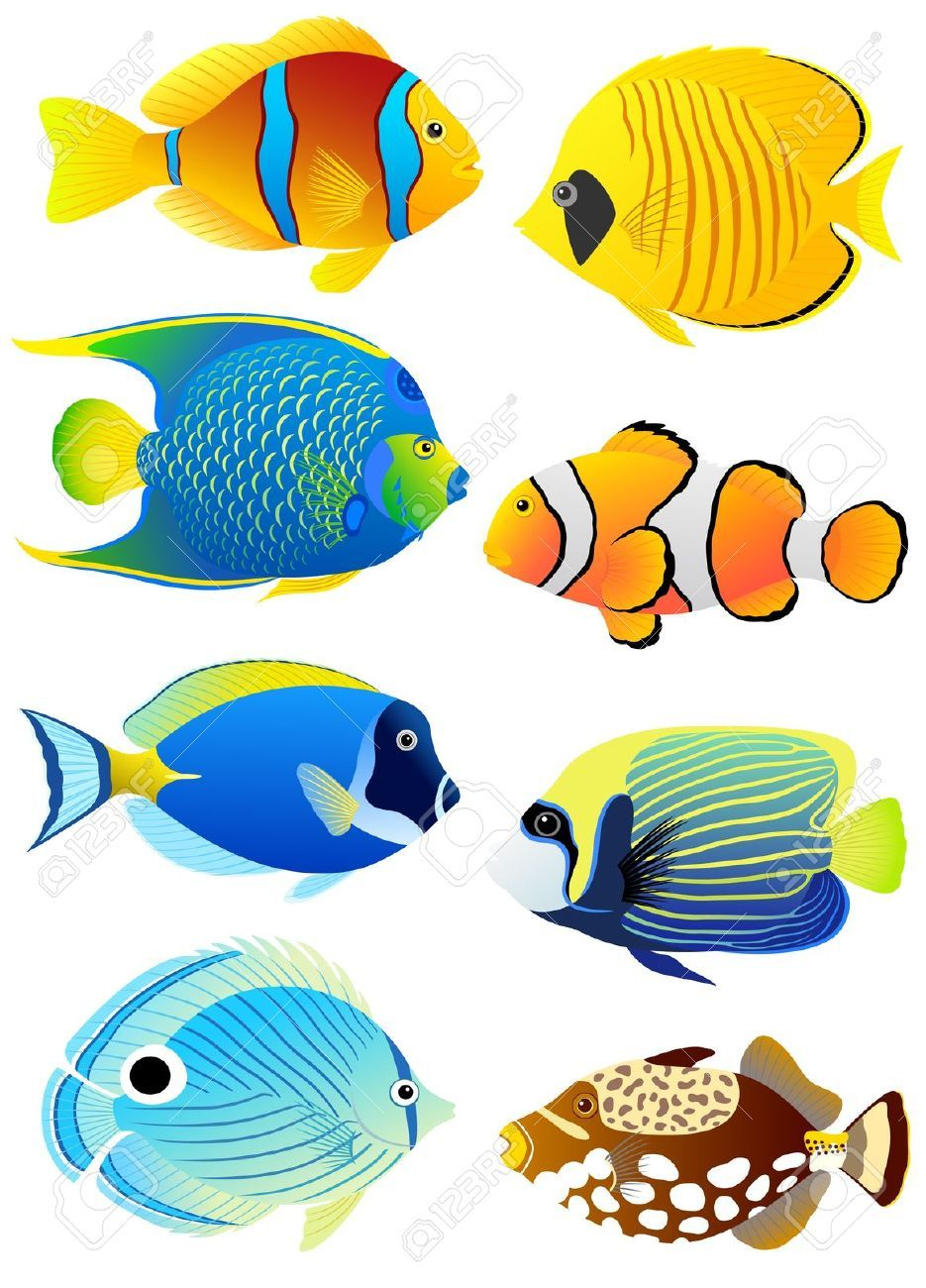 Collection Of Colorful Tropical Fish