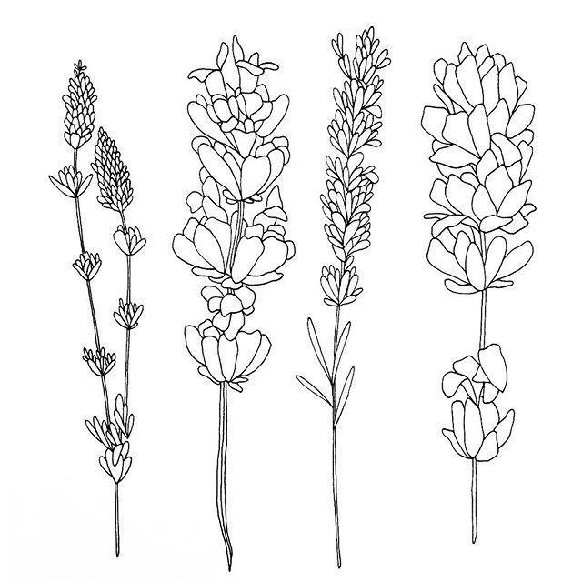 F6c08bed689b5c66ce56c4d644108a47 Jpg 640 640 Flower Drawing Lavender Tattoo Lilac Tattoo