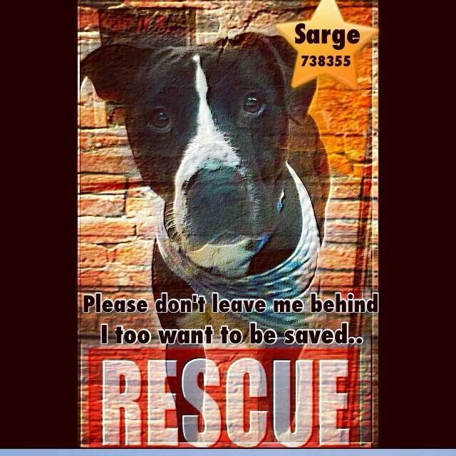 Please share sarge he is so cute