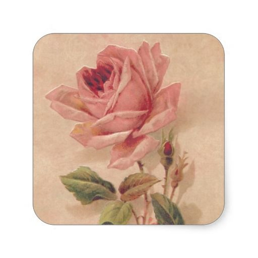 =>>Cheap          French Victorian Pink Rose Sticker           French Victorian Pink Rose Sticker This site is will advise you where to buyShopping          French Victorian Pink Rose Sticker Here a great deal...Cleck Hot Deals >>> http://www.zazzle.com/french_victorian_pink_rose_sticker-217929372297413871?rf=238627982471231924&zbar=1&tc=terrest