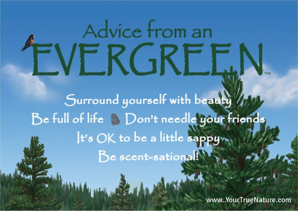 Advice from - An Evergreen | Nature quotes trees, Tree quotes, Nature quotes