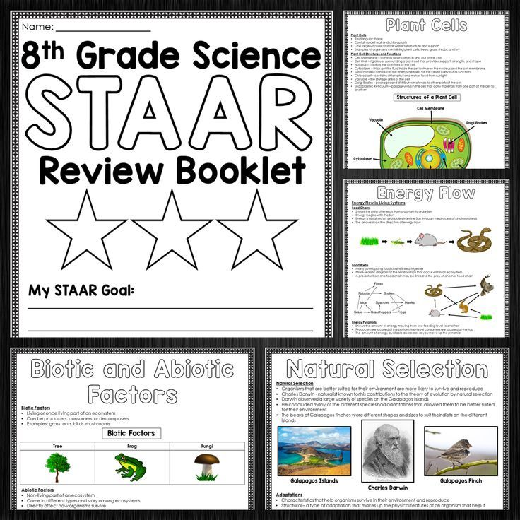 8th Grade Science STAAR Review Booklet Bundle 8th grade