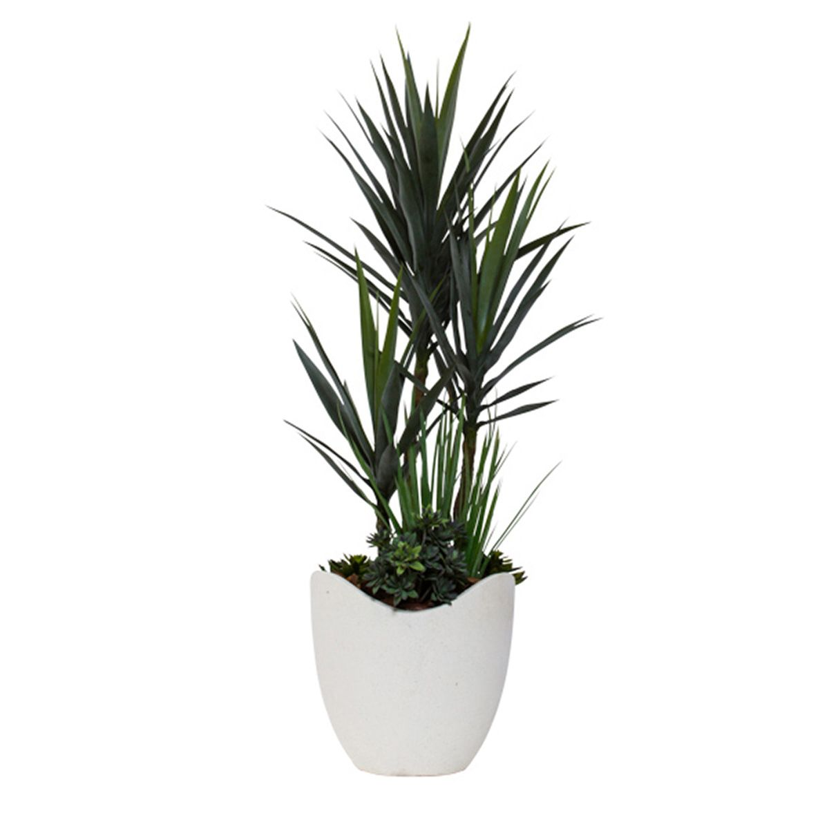 Yucca Combination In White Wavy Terrazzo Pot Yucca, Pot
