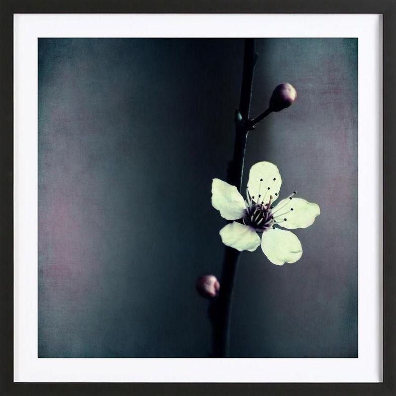 Blumen Solitaire