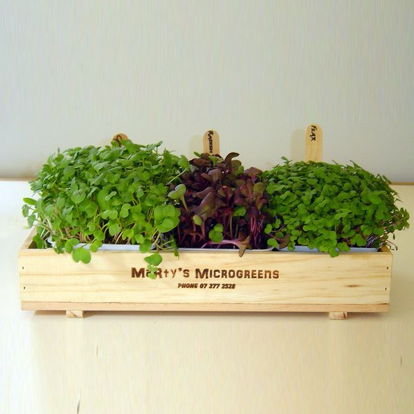 Diy Microgreen Kit Microgreens Pinterest Display