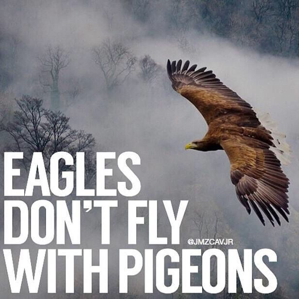Image result for fly with eagles
